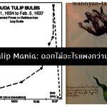 Tulip Mania บทสรุปวิกฤต เมื่อดอกไม้ราคาแพงกว่าบ้าน